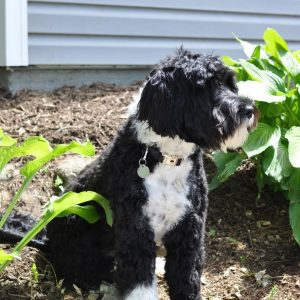 dog-behavior-blog