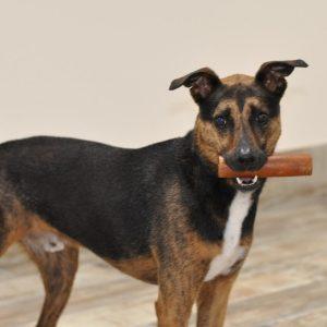 dog-body-language-blog