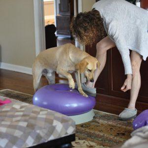 dog-training-blog