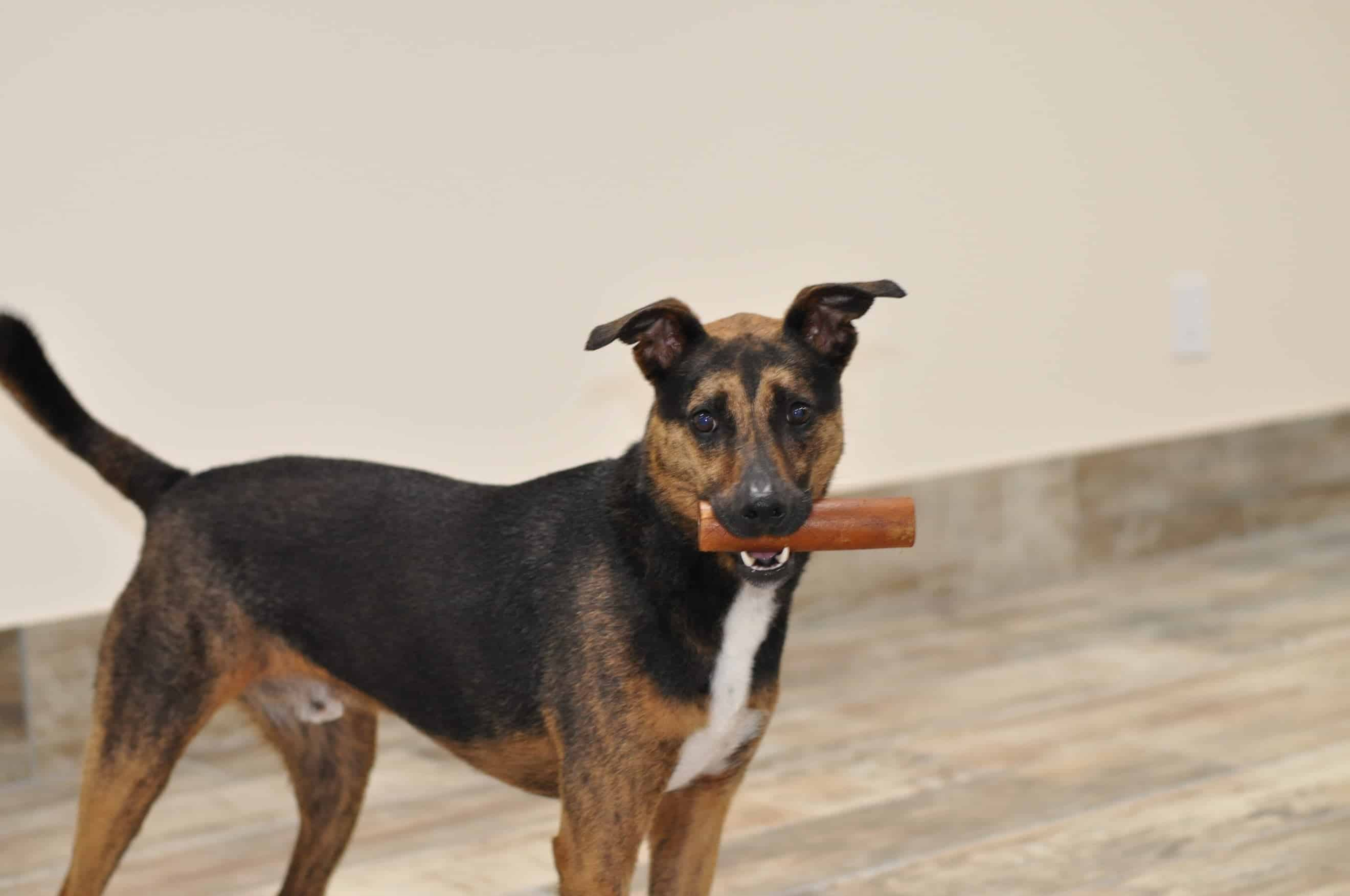 Dog holding a bone