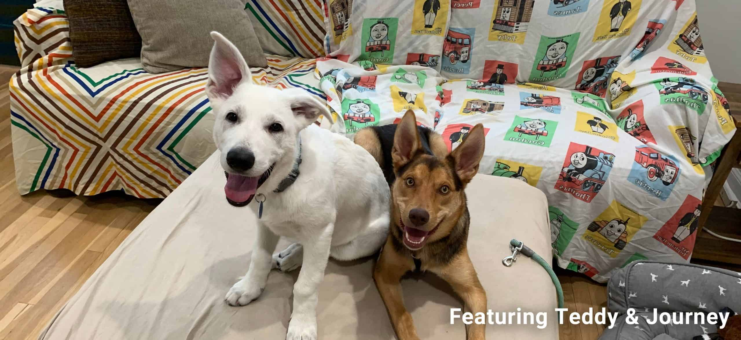Puppies teddy and journey sitting on a couch, smiling at the camera. Text says Featuring Teddy & Journey