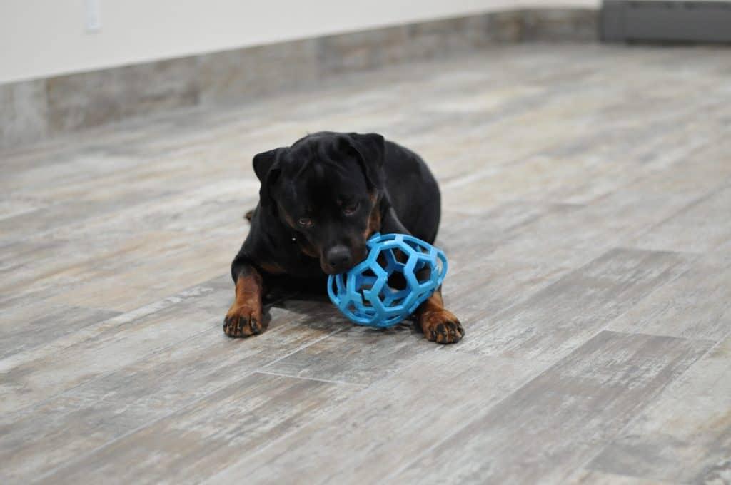 Dog Resource Guarding A Ball